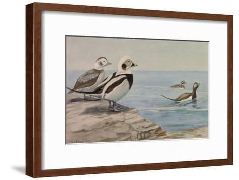 A Painting of Long-Tailed Ducks, Clangula Hyemalis-Louis Agassi Fuertes-Framed Art Print