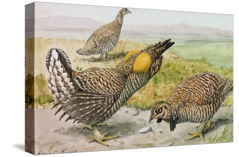 A Painting of a Male and Female Prairie Chicken with a Heath Hen-Louis Agassi Fuertes-Stretched Canvas Print