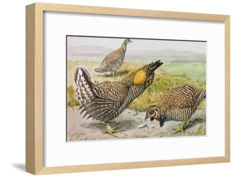 A Painting of a Male and Female Prairie Chicken with a Heath Hen-Louis Agassi Fuertes-Framed Art Print