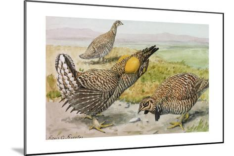 A Painting of a Male and Female Prairie Chicken with a Heath Hen-Louis Agassi Fuertes-Mounted Giclee Print