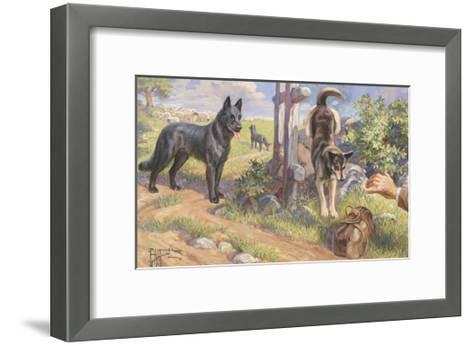 Groenendael and Malinois Dogs Work as Herders and Couriers-Edward Herbert Miner-Framed Art Print
