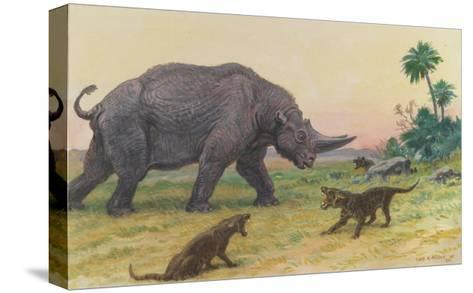 Bony Growths on the Arsinoitherium Protect it Against Hyaenodons-Charles R. Knight-Stretched Canvas Print