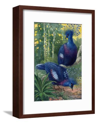 A View of the Flimsy Crests of Two Victoria Crowned Pigeons-Hashime Murayama-Framed Art Print