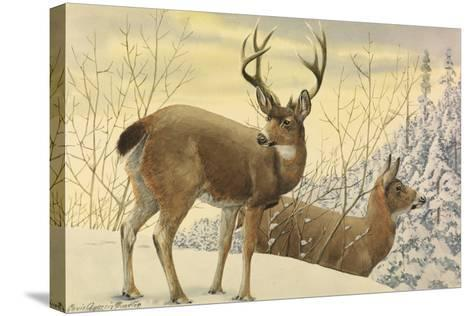 A Painting of Two Black-Tailed Deer Standing in the Snow-Louis Agassi Fuertes-Stretched Canvas Print