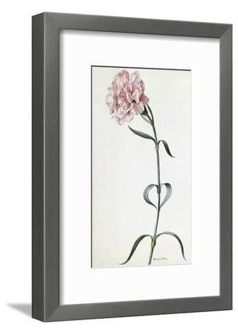 A Painting of a Sprig of Pink Carnation-Mary E. Eaton-Framed Art Print