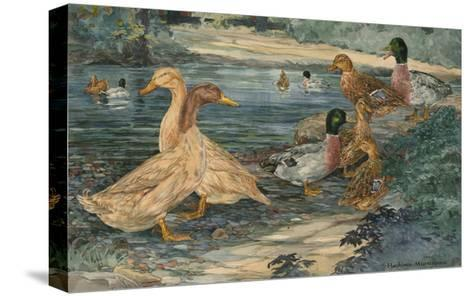 A Painting of Buff Ducks and Gray Call Ducks-Hashime Murayama-Stretched Canvas Print