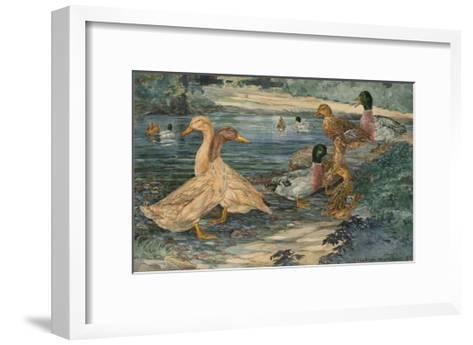 A Painting of Buff Ducks and Gray Call Ducks-Hashime Murayama-Framed Art Print