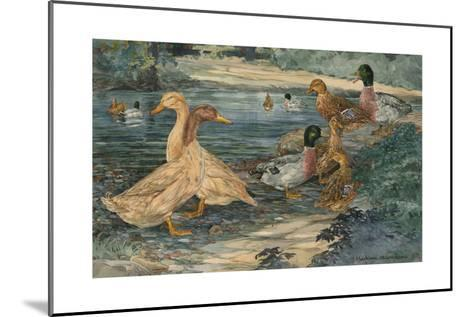 A Painting of Buff Ducks and Gray Call Ducks-Hashime Murayama-Mounted Giclee Print