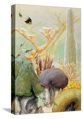 Fish Swim Between Coral Colonies Formed over the Centuries-Else Bostelmann-Stretched Canvas Print