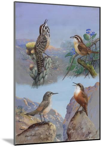 A Painting of Several Wren Species-Allan Brooks-Mounted Giclee Print