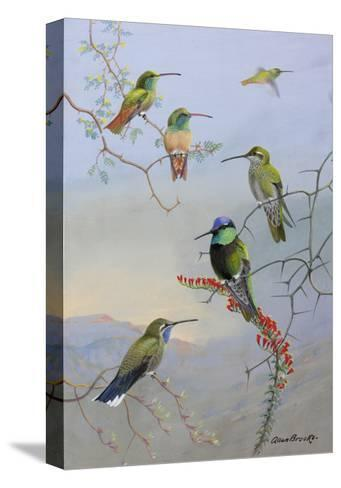 A Painting of Several Species of Hummingbirds Perched on Branches-Allan Brooks-Stretched Canvas Print