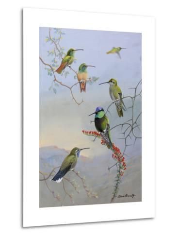 A Painting of Several Species of Hummingbirds Perched on Branches-Allan Brooks-Metal Print