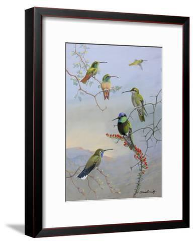 A Painting of Several Species of Hummingbirds Perched on Branches-Allan Brooks-Framed Art Print