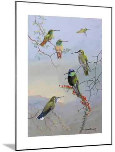 A Painting of Several Species of Hummingbirds Perched on Branches-Allan Brooks-Mounted Giclee Print