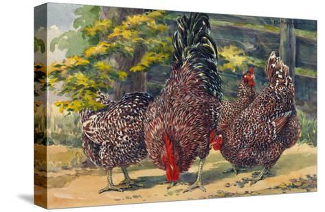 England's Speckled Sussex Pecks the Ground-Hashime Murayama-Stretched Canvas Print