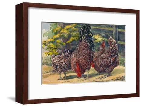 England's Speckled Sussex Pecks the Ground-Hashime Murayama-Framed Art Print