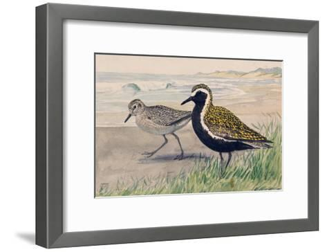A Painting of Two Golden Plovers in Winter and Summer Plumage-Louis Agassi Fuertes-Framed Art Print