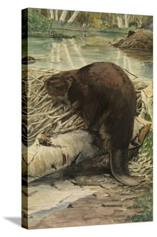 A Painting of an American Beaver Sitting on a Freshly Gnawed Log-Louis Agassi Fuertes-Stretched Canvas Print