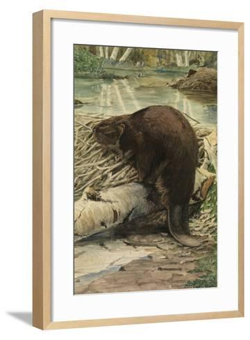 A Painting of an American Beaver Sitting on a Freshly Gnawed Log-Louis Agassi Fuertes-Framed Art Print