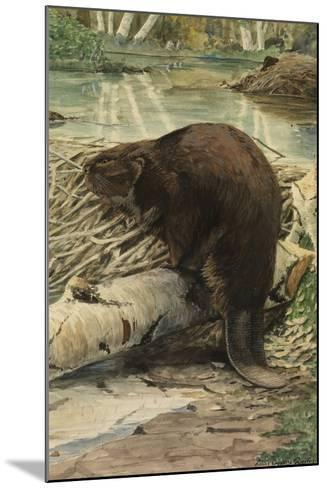 A Painting of an American Beaver Sitting on a Freshly Gnawed Log-Louis Agassi Fuertes-Mounted Giclee Print