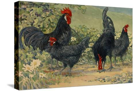 Four Blue Andalusian Chickens, or Historically Blue Minorca Chickens-Hashime Murayama-Stretched Canvas Print