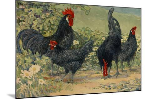 Four Blue Andalusian Chickens, or Historically Blue Minorca Chickens-Hashime Murayama-Mounted Giclee Print