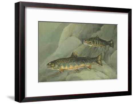 A Painting of a Pair of Brook Trout Swimming over Rocks-Hashime Murayama-Framed Art Print