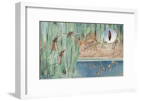 An Illustration of the Life Cycle of Salt-Marsh Mosquitoes-Hashime Murayama-Framed Art Print