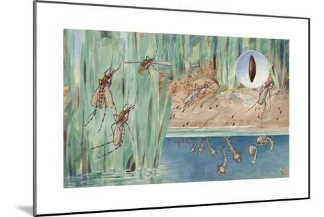 An Illustration of the Life Cycle of Salt-Marsh Mosquitoes-Hashime Murayama-Mounted Giclee Print