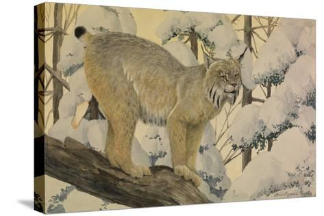 A Painting of a Canada Lynx Standing on Fallen Tree Trunk-Louis Agassi Fuertes-Stretched Canvas Print