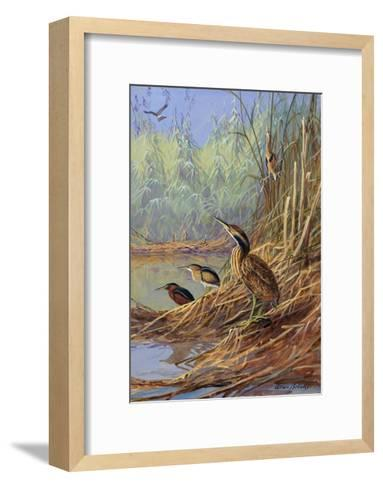 The Brown Feathers of Bitterns Blend with the Variegated Surrounding-Allan Brooks-Framed Art Print