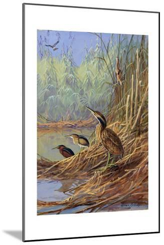 The Brown Feathers of Bitterns Blend with the Variegated Surrounding-Allan Brooks-Mounted Giclee Print