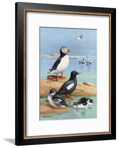 A Painting of an Atlantic Puffin, Black Guillemots, and Dovekies-Allan Brooks-Framed Art Print