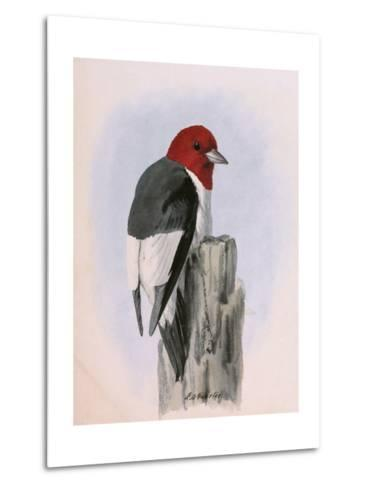 A Painting of a Red-Headed Woodpecker Perched on a Tree Stump-Louis Agassi Fuertes-Metal Print