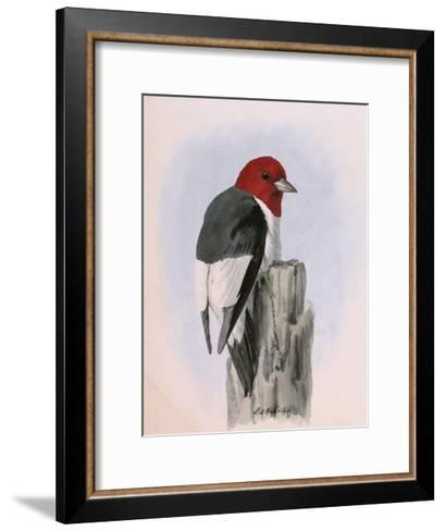 A Painting of a Red-Headed Woodpecker Perched on a Tree Stump-Louis Agassi Fuertes-Framed Art Print