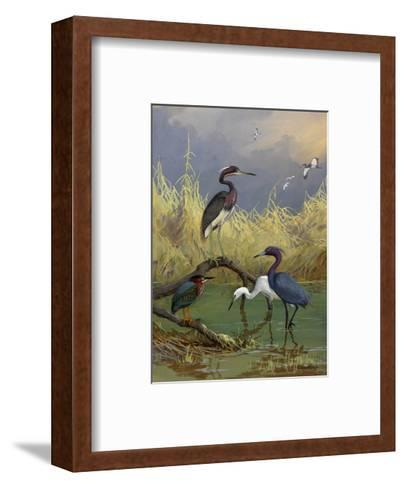 Various Herons Feed in Shallow Water-Allan Brooks-Framed Art Print