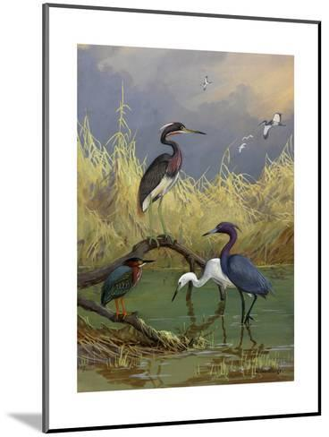 Various Herons Feed in Shallow Water-Allan Brooks-Mounted Giclee Print