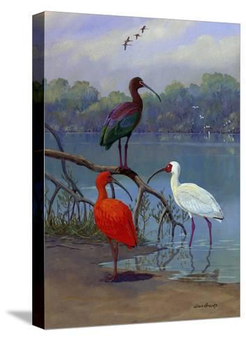 Various Ibis Perch Lakeside-Allan Brooks-Stretched Canvas Print