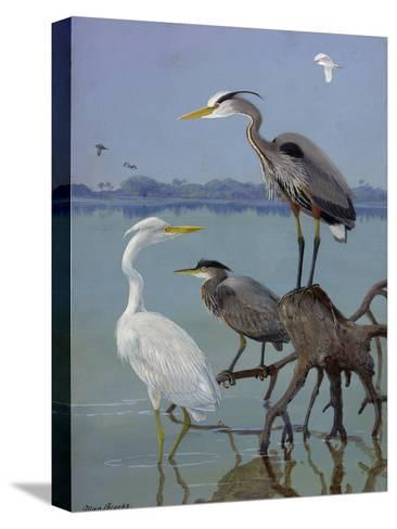 Great White and Blue Herons Perch on a Tree Trunk in Shallow Waters-Allan Brooks-Stretched Canvas Print