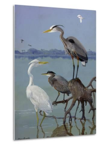 Great White and Blue Herons Perch on a Tree Trunk in Shallow Waters-Allan Brooks-Metal Print