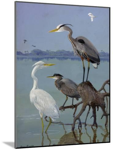 Great White and Blue Herons Perch on a Tree Trunk in Shallow Waters-Allan Brooks-Mounted Giclee Print