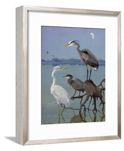 Great White and Blue Herons Perch on a Tree Trunk in Shallow Waters-Allan Brooks-Framed Art Print