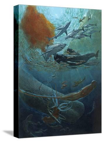 Marine Animals of the Kaikoura Canyon, a Trench Off South Island-John Dawson-Stretched Canvas Print