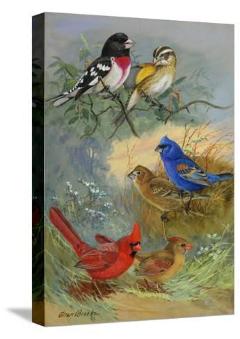 A Painting of Grosbeaks and Cardinals-Allan Brooks-Stretched Canvas Print