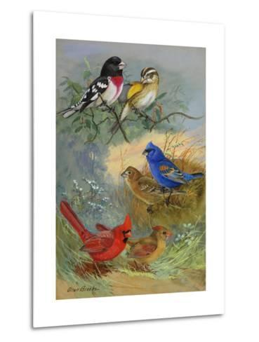 A Painting of Grosbeaks and Cardinals-Allan Brooks-Metal Print