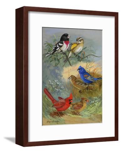 A Painting of Grosbeaks and Cardinals-Allan Brooks-Framed Art Print