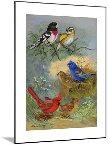 A Painting of Grosbeaks and Cardinals-Allan Brooks-Mounted Giclee Print