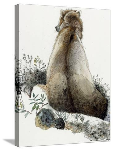Illustration of a Grizzly Bear in the Arctic National Wildlife Refuge-Jack Unruh-Stretched Canvas Print