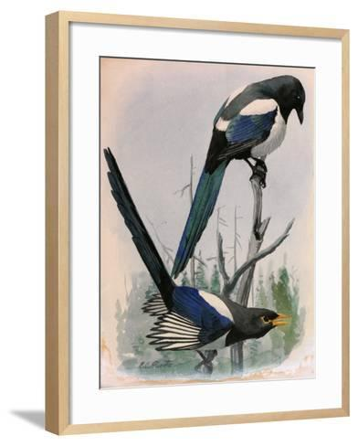 A Painting of Two Species of Magpie Perched on Tree Branches-Louis Agassi Fuertes-Framed Art Print