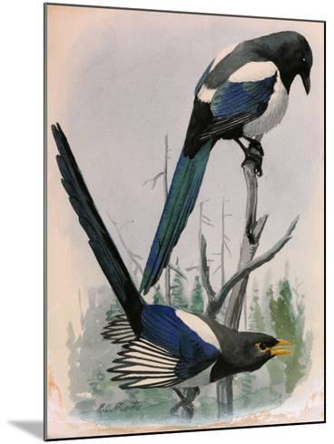 A Painting of Two Species of Magpie Perched on Tree Branches-Louis Agassi Fuertes-Mounted Giclee Print